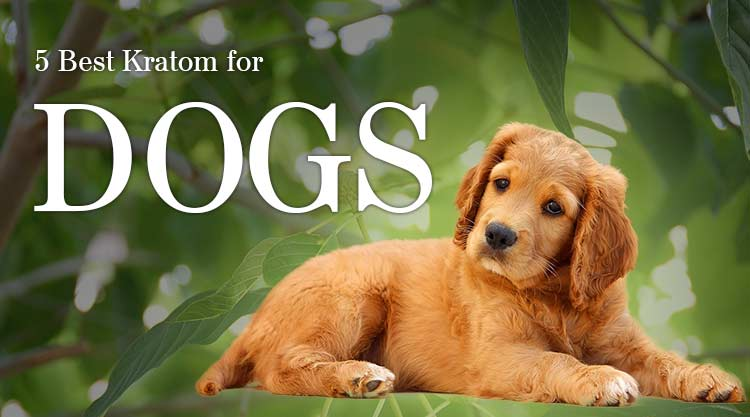 5 Best Kratom for Dogs