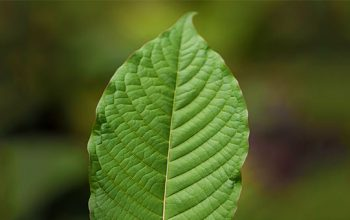 Best Kratom Supplements that enhance Kratom use and effects