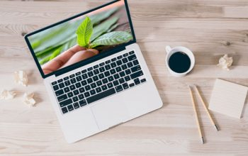 Top Options to Purchase Kratom Online